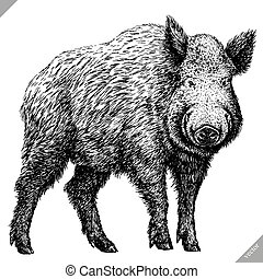 grabar, vector, aislado, negro, blanco, ilustración, cerdo