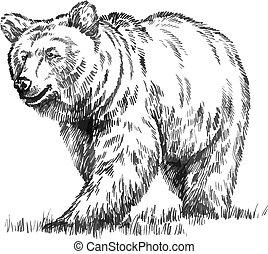 grabar, vector, oso, aislado, negro, blanco