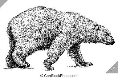 grabar, vector, oso, aislado, negro, blanco, ilustración