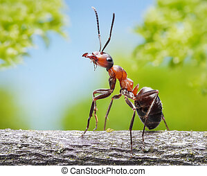 portrait of graceful ant formica rufa on branch