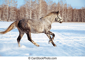 graceful galloping gray horse against the background of winter forest