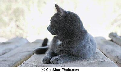 Graceful gray cat lies on a wooden board.