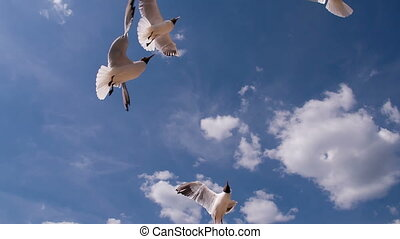 graceful seagull soar on clouds background
