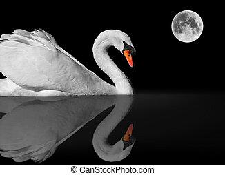 Graceful white swan under moonlight