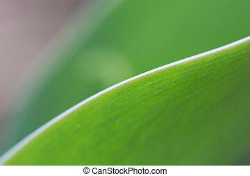 Gracefully Curved Leaf #1