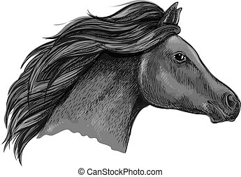 graciøs, hest, sort, portræt