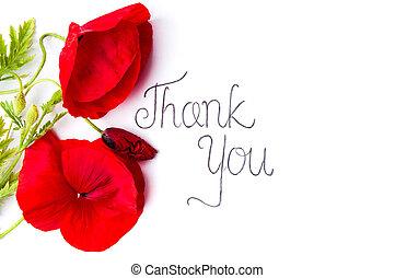 gracias card, con, amapola roja, flores