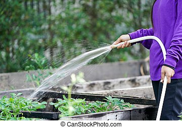 Graden worker taking care the plant in the garden.
