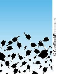 graduación, sombrero, sacudida