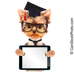 graduated dog with tablet pc - graduated dog isolated and...