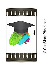 graduation hat on brain. The film strip