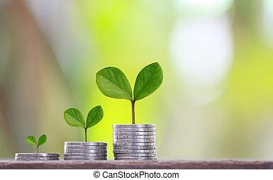 graf, affär, träd, växte, medaljong, grön investering, topp, profits., begrepp, form