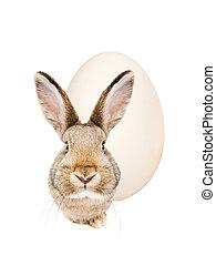 grafické pozadí., neposkvrněný, velikonoční králík, vejce, osamocený