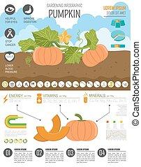grafico, giardinaggio, infographic., pumpkin., lavoro, agricoltura, template.