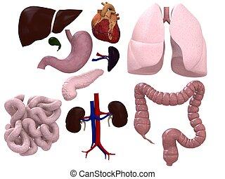 grafico, organi
