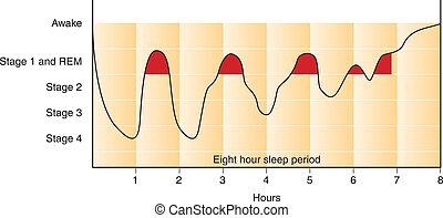 grafico, sonno, ciclo