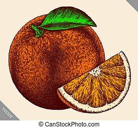 graficzny, odizolowany, ilustracja, ręka, wektor, wyryć, pomarańcza, pociągnięty