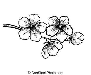 graficzny, wiosna, ręka., kwitnąc, drzewo, rysunek, czarnoskóry, gałąź, biały, symbol, styl