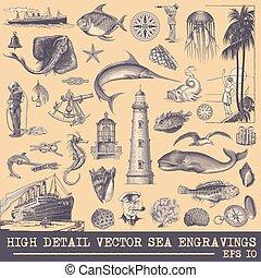 grafiki, wektor, zbiór, morski