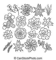 grafisch, succulent, verzameling