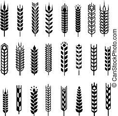 grafisch, tarwe, illustration., set, vrijstaand, achtergrond, vector, black , ontwerp, witte , oor, communie, pictogram