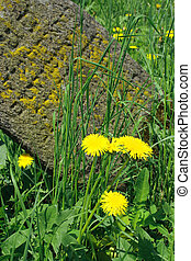 grafsteen, dichtbegroeid boven