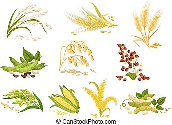 Grain and cereals ears vector isolated icons