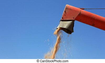 Unloading Cereal with Combine Grain Elevator