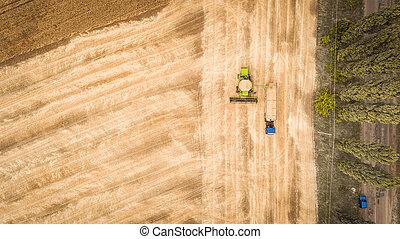 grain, beau, moissonneuse, camion, aérien, dumps, vue, field., nouveau, caravane, combiner