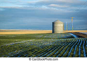Grain bin, winter wheat fields - Grain bin among wheat ...