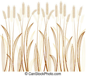 grain - cereal grass on white background
