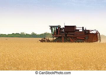 grain, champ, moissonneuse, combiner