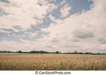 Grain crops on a field