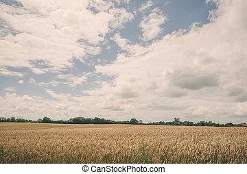 Grain crops on a field
