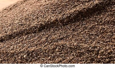 Grain factory, dumping wheat grain. Heap of oat, close up.