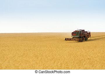 grain harvester combine in field - grain harvester combine...