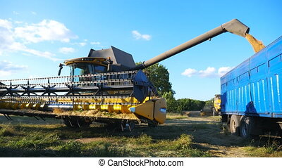 Grain harvester working in agriculture environment loading wheat grains in truck. Yellow dry kernels falling from combine auger into trailer. Process of rye pouring. Concept of harvesting. Slow motion.
