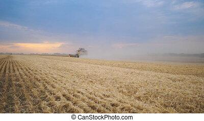 Grain harvester working in field gathering crop of ripe...