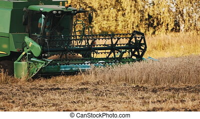 Side View of a grain header rolling. A big green combine harvester ready to cut the crops in the golden wheat field. Bright sunny day with trees in the background. Farmer can be seen sitting in the harvester.