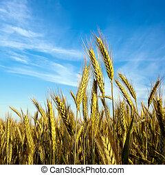 Grain in front of sky