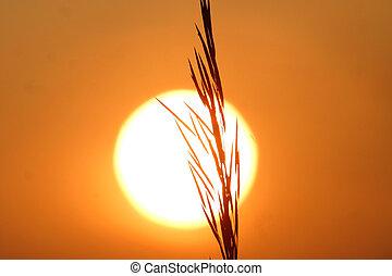 grain in silhouette