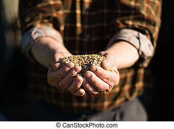 Grain in the hands of