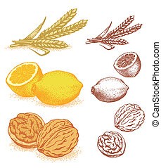 Grain, lemons, walnuts. Vector illustration