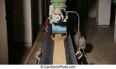 Grain moves along the conveyor belt. Wheat is transported by...