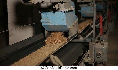 Grain moves along the conveyor belt.