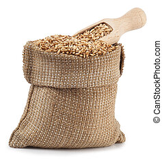 grain oats in burlap bag with a wooden scoop isolate