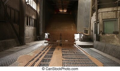 Grain truck unloading. Wheat is unloaded from a truck at a...