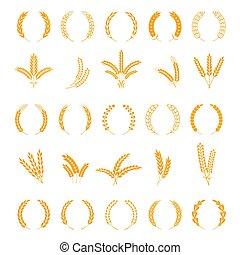 grain, vecteur, stalk., couronne, ears., récolte, cereal., orge, blé, pointes, champ riz, seigle, éléments, tiges, croissance