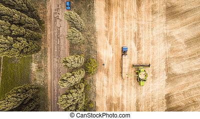 grain, vue, field., aérien, nouveau, combiner, caravane, beau, moissonneuse, dumps, camion