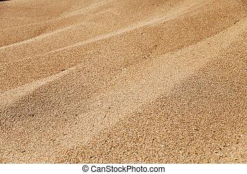grain wheat , closeup